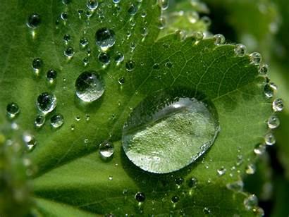Leaf Water Drops Clean Natural Bubble Pexels