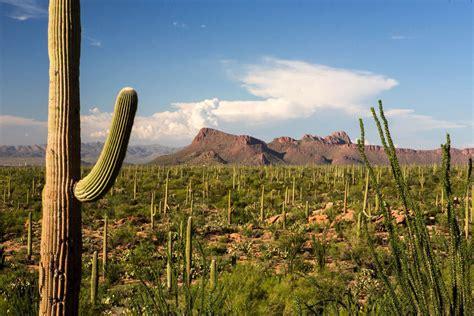 tucson visitors bureau saguaro national park symbol of the southwest home