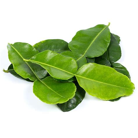 lime leaves kaffir lime leaves from your authentic thai supermarket