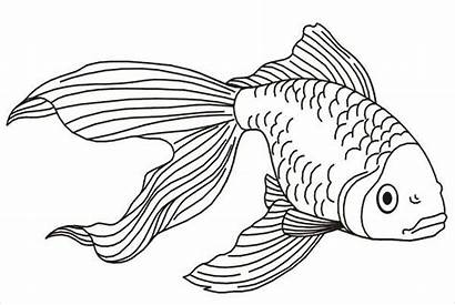 Fish Coloring Realistic Pages Template Printable Templates