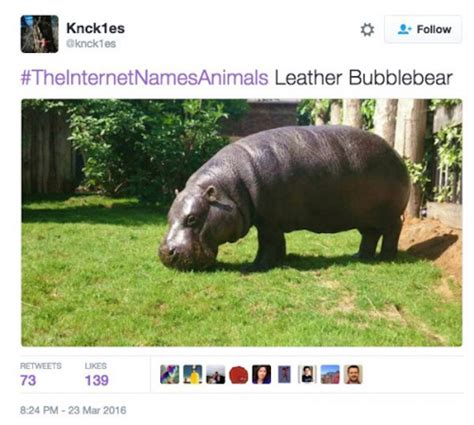 internet names animals