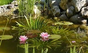 Algen Im Teich Entfernen : algen im teich ~ Orissabook.com Haus und Dekorationen