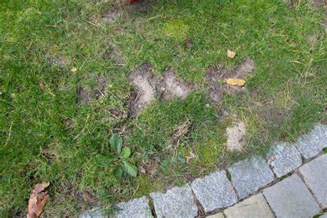 Im Rasen Loswerden by W 252 Hlm 228 Use Bek 228 Mpfen Erfolgreiche Ma 223 Nahmen