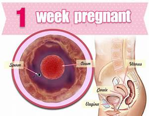 Week 1 Pregnancy - Signs, Symptoms, Tips, What to Expect