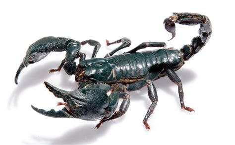 I Am A Killer Of Scorpions
