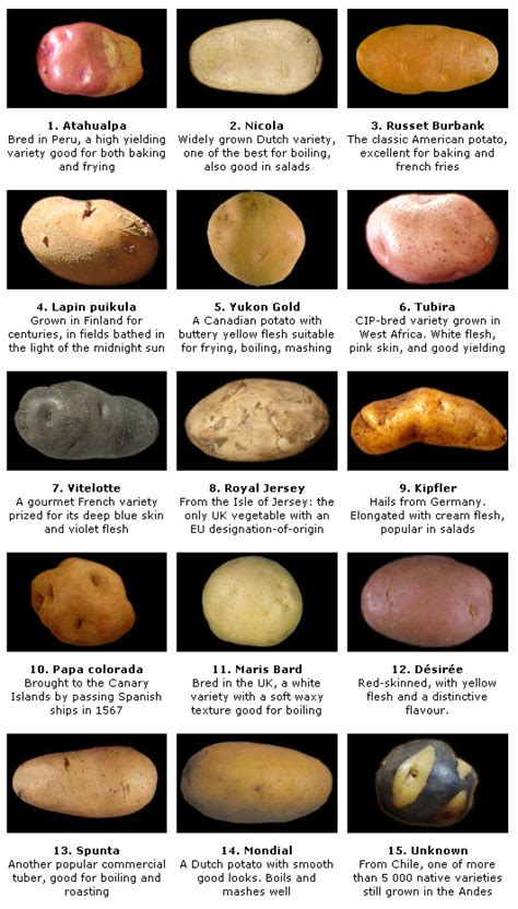 different types of potatoes recipes different types of potatoes and their uses seehow