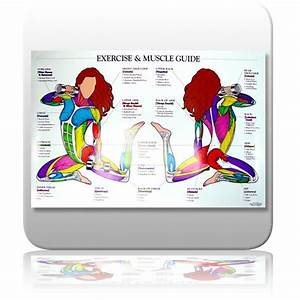 Muscle Chart For Exercise