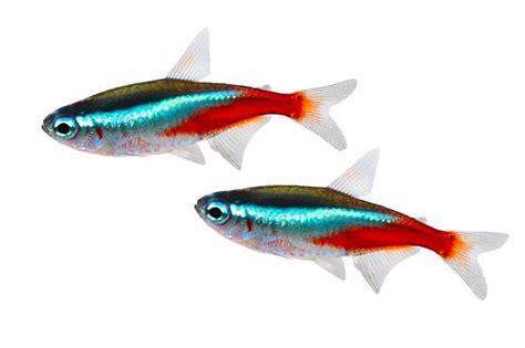 17 Most Popular Freshwater Fish