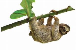 The Secret World Of Sloths