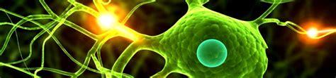 dispense di biologia facolt 224 di biologia categorie prodotto pieffecopy