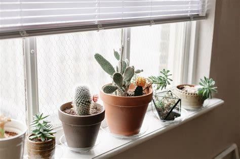 Window Sill Decor by Cacti On The Window Sill Houseplants Window Sill Decor
