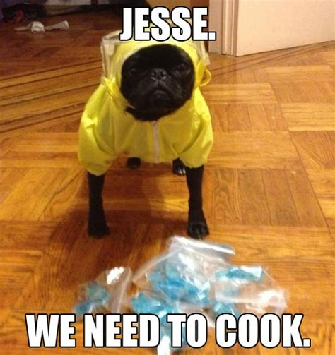 Breaking Bad Meme - breaking bad meme quot jesse we need to cook quot says the cute pug dog in the yellow hazmat suit