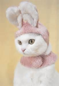 pet costumes for cats 25 adorable pet costumes kubby