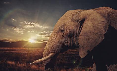 Wallpapers And Backgrounds Hd Fondos De Pantalla De Elefantes Wallpapers Hd Para