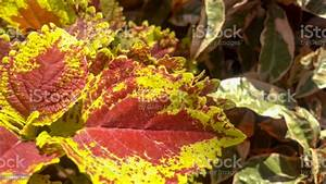 Beautiful, Leaf, Stock, Photo, -, Download, Image, Now