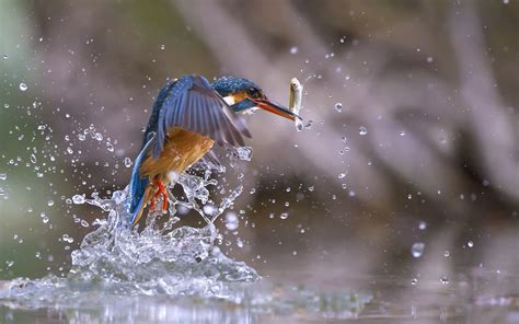 Animals And Birds Wallpaper - nature animals birds fish water water drops