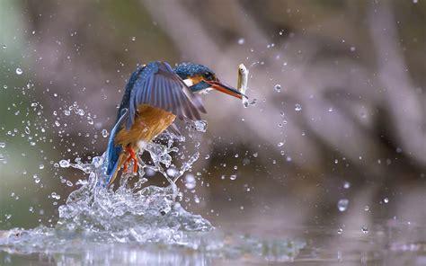 Water Animal Wallpaper - nature animals birds fish water water drops