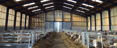 shed more light on synonym image gallery sheep shed