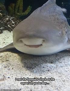 Shark Attack Quotes. QuotesGram