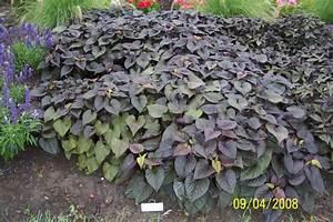 East-Texas-Plants