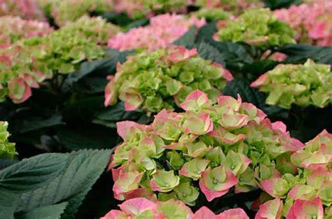 Top 10 Flowering Shrubs  Flowering Bushes  Birds & Blooms