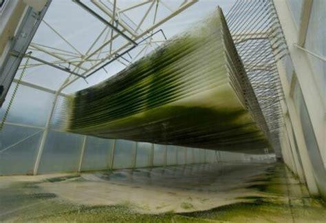 algen im tank forscher arbeiten  kerosin der zukunft