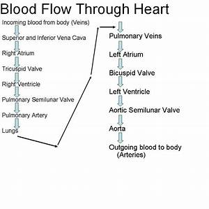 Blood Flow Through Heart Diagrams