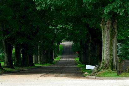 Street Tree Road Lined Wallpapers Background Wall