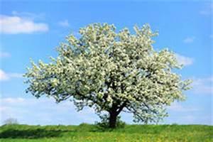 Rosa Blühender Baum Im Frühling : bl hender baum am fr hling stockbild bild 30661111 ~ Lizthompson.info Haus und Dekorationen