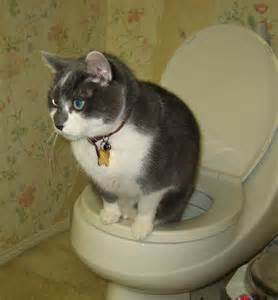 how to potty a cat now kitty can flush citikitty unveils the world s