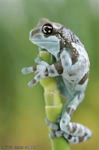 Frog Insect