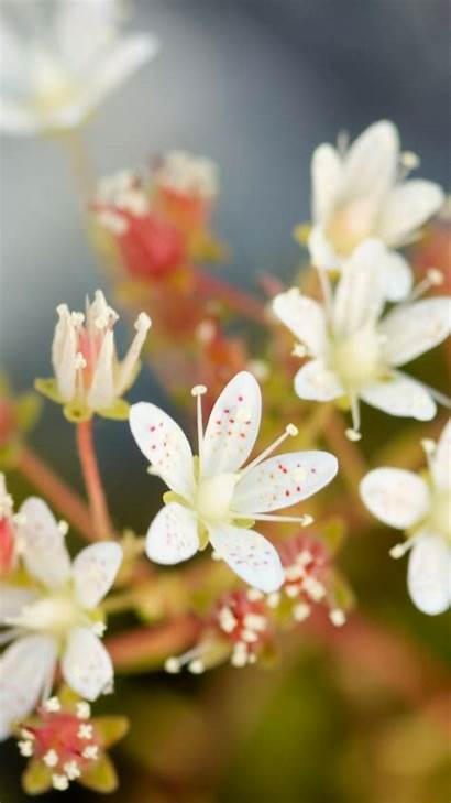 Screen Wallpapers Desktop Flowers Background