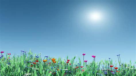 Animated Summer Wallpapers - summer flowers screensavers and wallpaper wallpapersafari
