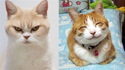 Happy Cat  Imagining Happenings