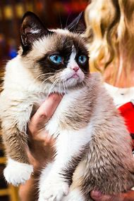 Grumpy Cat at Disneyland