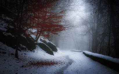 Winter Snow Path France Cold Leaves Nature