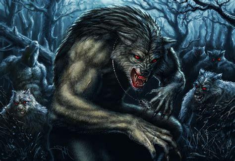 5 11 beast black wolf image gallery
