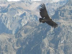 World's Largest Flying Bird