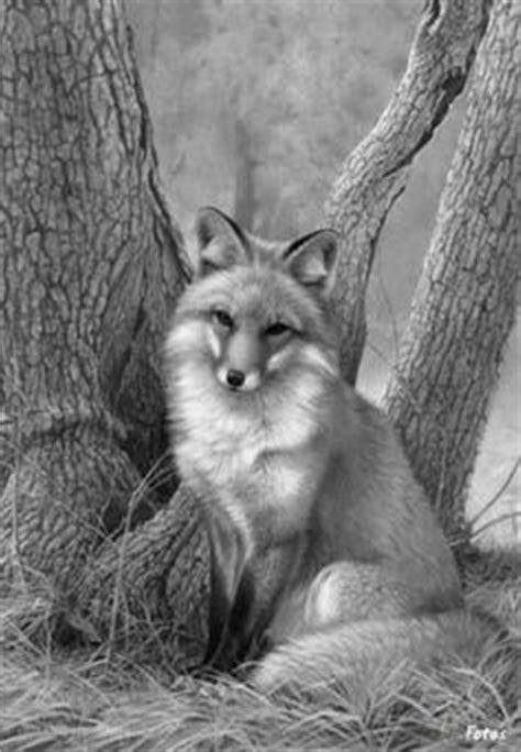 life   wild fox  zen koan   times james ford