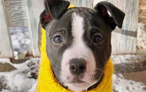 awesome names  pitbulls dogtime