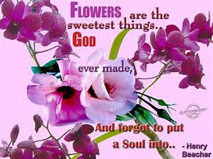 Funny Quotes About Flowers. QuotesGram