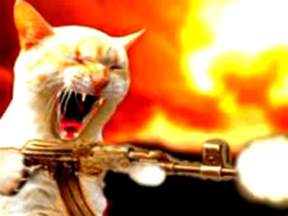 cat war weaponize your cat war kitteh on the prowl