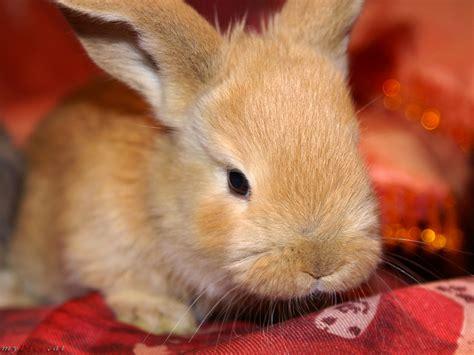 suesse hasen kaninchen bilder mypicsat
