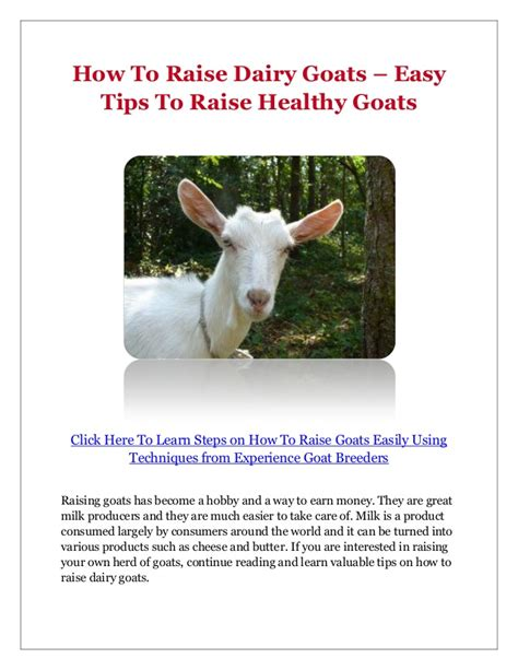how to raise goats how to raise dairy goats easy tips to raise healthy goats