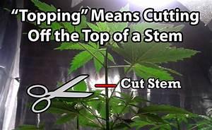 Pruning Marijuana Diagram