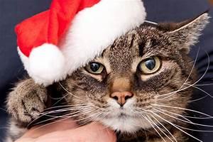 Gemüse Für Katzen : die 10 besten weihnachtsgeschenke f r ihre katze ~ Watch28wear.com Haus und Dekorationen