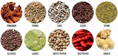 Spices Kinds Sauce Different Pepper Ginger Bulldog