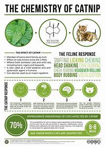 Chemistry Of Catnip And Other Everyday Chemical Compounds With  U0026quot Compound Interest U0026quot