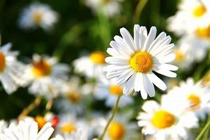 Flowers Meaning Dream Symbol Word Symbolism