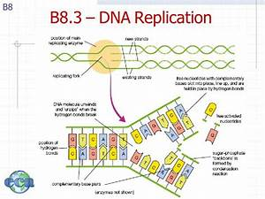 topic b part 8 nucleic acids ib chemistry topic b With explain how dna serves as its own template during replication
